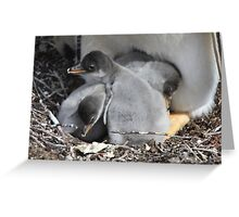 Gentoo chicks Greeting Card