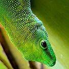 Indoor Menagerie - Gecko - Dunedin Butterfly Sanctuary by AndreaEL