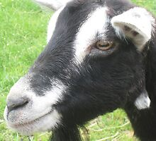 Portrait of a Goat SAVE DEEN CITY FARM!! by ellismorleyphto