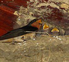 Family Sing Along!  (Barn Swallows) by Robert Miesner
