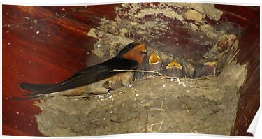 Family Sing Along!  (Barn Swallows) by Robert Miesner