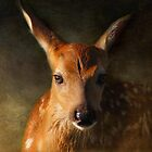 Yes, The Eyes Are Green in Fawns by Lee-Anne Carver