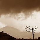 Lone Goat Under Stormy Skies by deserttrends