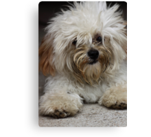 Introducing Alvin Canvas Print