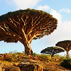 Dragon Trees of Socotra by George Kashouh