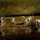 The Herd by Catherine Hamilton-Veal  ©