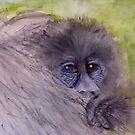 Mountain  Gorilla  Baby by Heidi Mooney-Hill