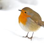 Robin in snow by Richard Bowler