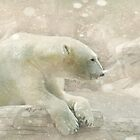 Polar Bear by Barbara Zuzevich