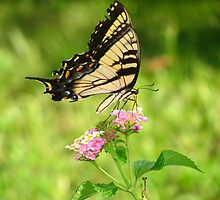 Lady Lantana by konshua