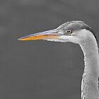 Black and white heron by Richard Bowler