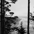 Cape Disappointment Washington Coast by mikeno