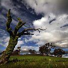 Overgrown by DaveBassett