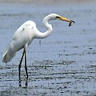 Great Egret - Fishing at Lemon Tree Passage  by Alwyn Simple