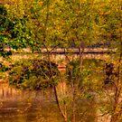 Bridge Over Troubled Water  by Monica M. Scanlan