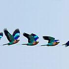 Dazzling flight by John Banks