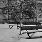 Still Silence by Sandra Guzman