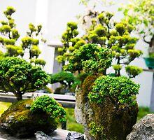 bonsai trees at the chinese garden by Leonardo Tarjadi