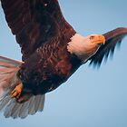 """Fly Away Birdie"" - bald eagle flying by John Hartung"