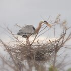 Nesting ... by Danceintherain
