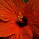Blur Stamen: On featured work:1.The groups/chrome-mafia Group 2. Creative-talented-and-unknown Group3.Complex-simplicity Group by Kornrawiee