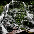 Nelson Falls 4 by Andrew Wilson