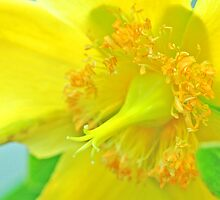 Brugges Yellow Flower by Danielle Girouard