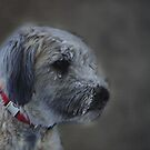Snow Dog by Judi Taylor