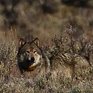 Wolf Abstract with Attitude by Ken McElroy