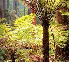 Dandenong Ranges National Park by John Bullen
