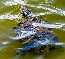 Pond turtle by ♥⊱ B. Randi Bailey