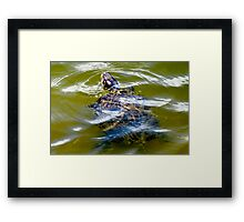 Pond turtle Framed Print