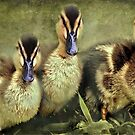 """""""Three Little Sweethearts..."""" by Rosehaven"""