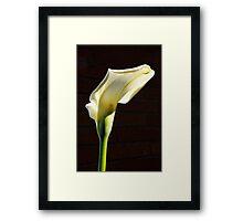 lovely sunlit calla lily before brick Framed Print