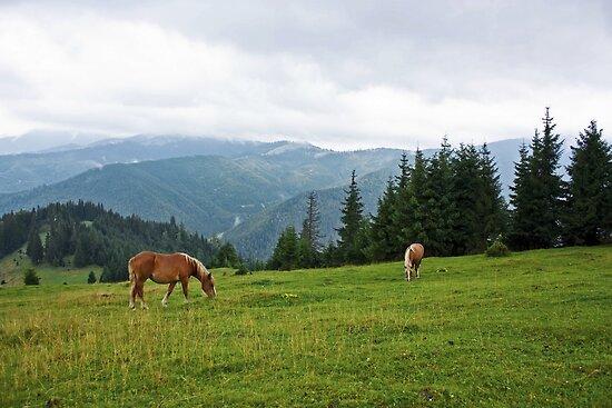 Horses by Dominika Aniola