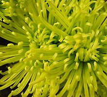 Green Chrysanthemums by Marie Smith