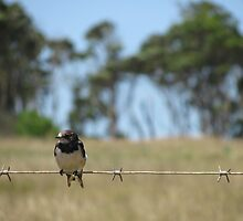 Bird on a wire by Andrew Perelson