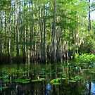 A sunny swamp day by Kyle Wolff