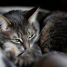 Grumpyface by EchoNorth