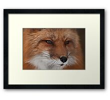 Foxy Baby Framed Print