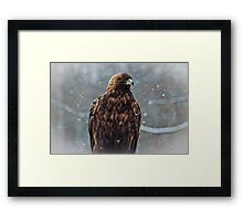 Golden Eagle in the Snow Framed Print