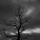 Drama Tree  by brimo