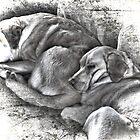 To Sleep Perchance to Dream by Brenda Boisvert
