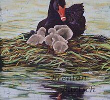 Black Swan and Cygnets by brentonb