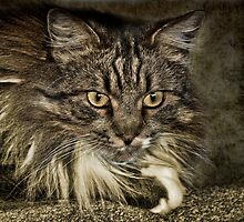 The Fluff Muffin by Diana Graves Photography