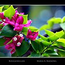 Bougainvillea - - Posters & More by Maria A. Barnowl