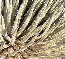 Soft Silversword Fingers - - Cards by Maria A. Barnowl