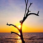 the tree by jomtien