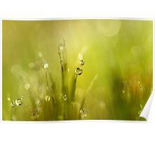 Sunshine Moss Poster