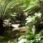 Lilydale Falls Creek - Lilydale, Tasmania by RainbowWomanTas
